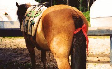 zdjęcie: www.horsejournals.com