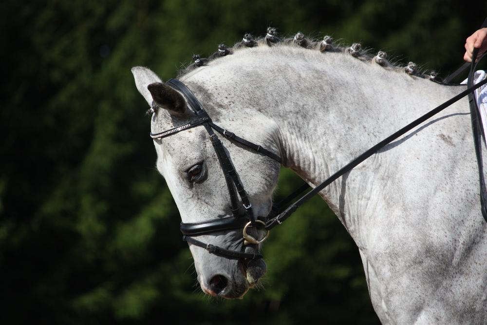 Diy Przychodzi Koń Do Fryzjera Horsemaniapl