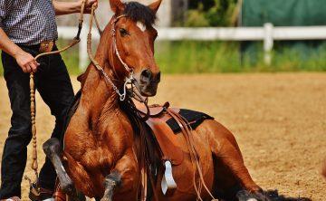 horse-1424851_960_720