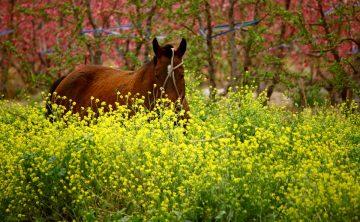 horse-58095_960_720