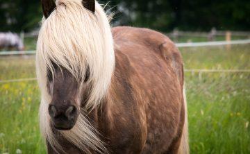 horse-783041_960_720
