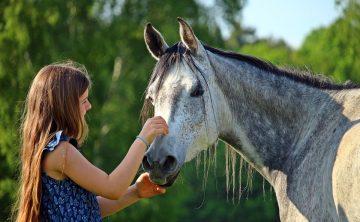 koń-siwy-przyjaźń-dziewczyna-lato