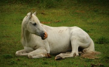 horse-1417275_960_720