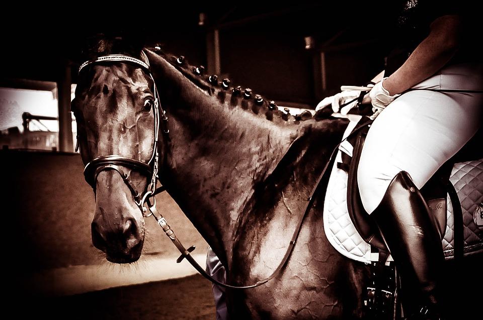 koń-jazda-waga-udo