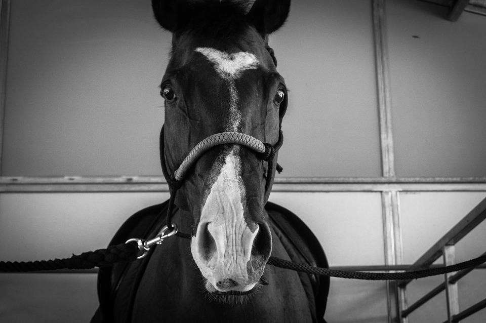 horse-1413258_960_720