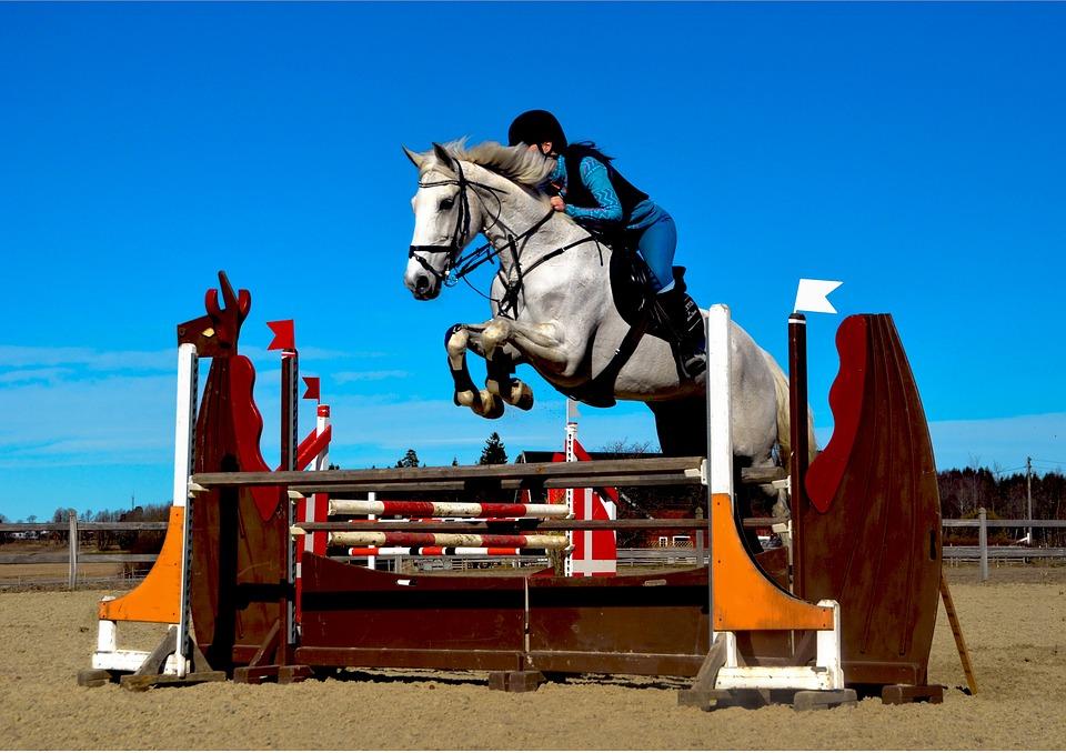 horse-2350573_960_720