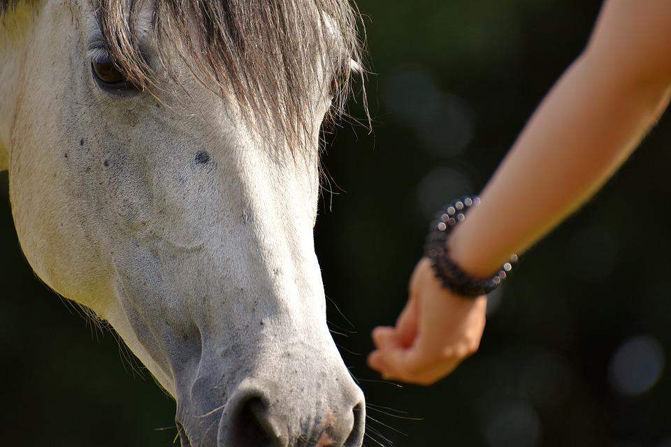 horse-2758813_960_720