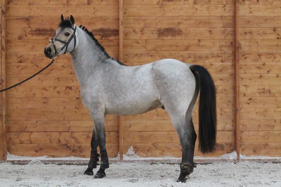 pony-2430507_960_720