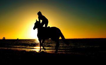 koń-cień-plaża-jazda