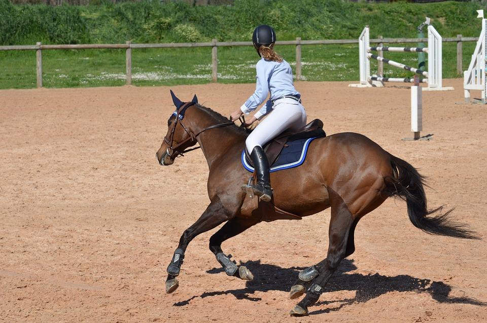 koń-gniady-skoki-najazd
