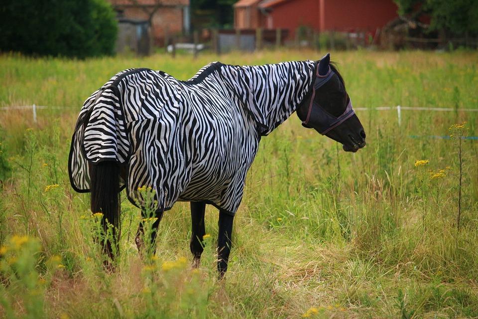 koń-kary-biało-czarne-paski-derka-łąka