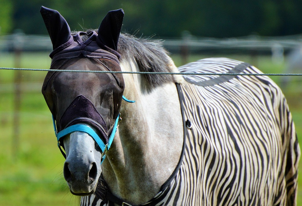 koń-siwy-derka-zebra-maska