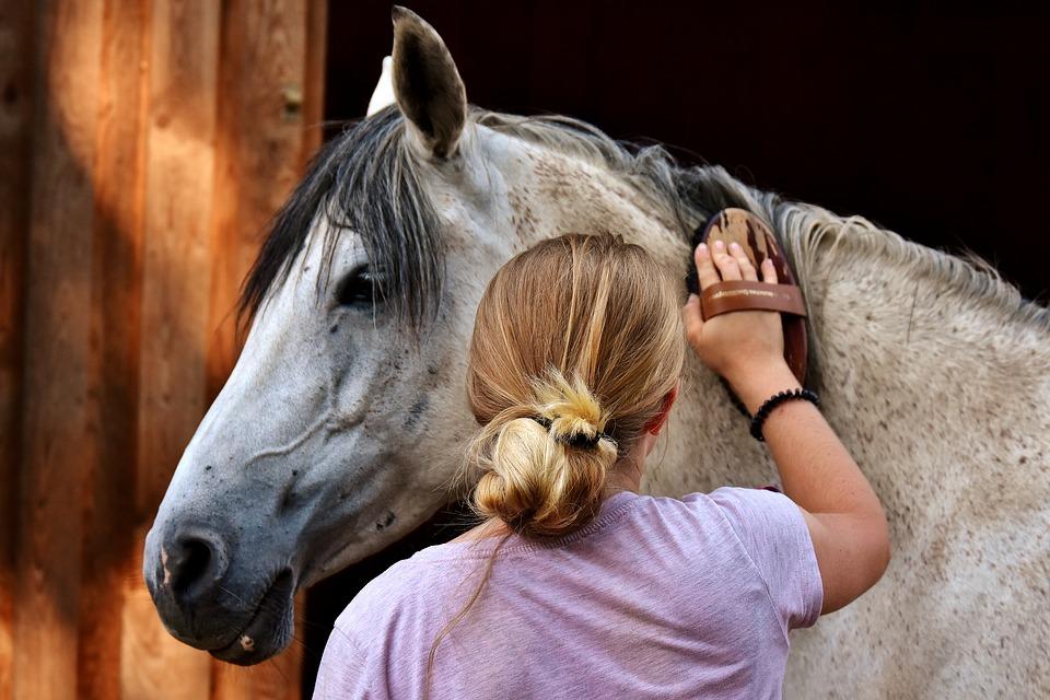 koń-siwy-dziewczyna-czyszczenie