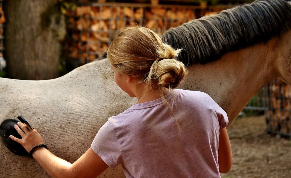 koń-siwy-dziewczyna-czyszczenie2