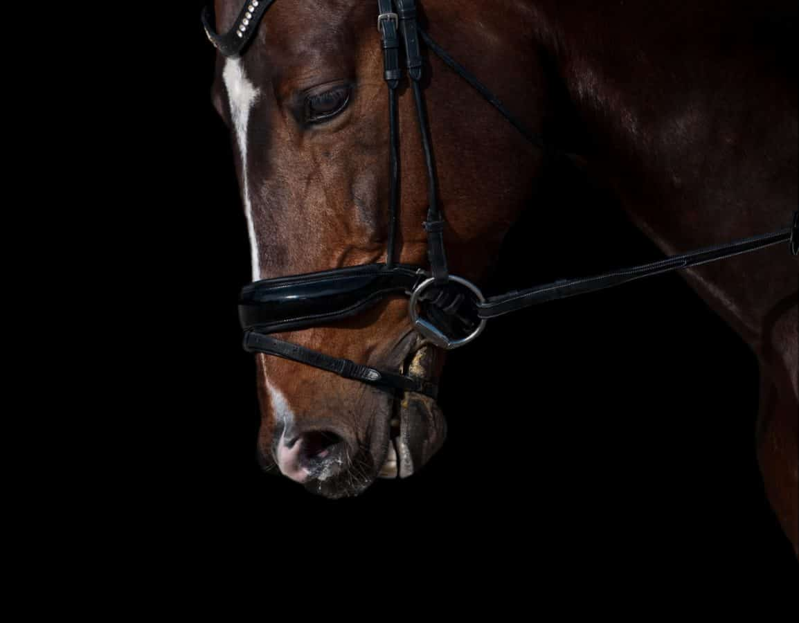 koń-gniady-nachrapnik2
