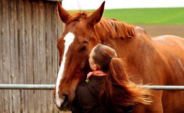 koń-kasztan-dziewczyna-miłość